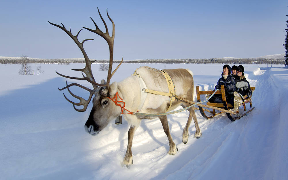iso-syote_reindeerfarm